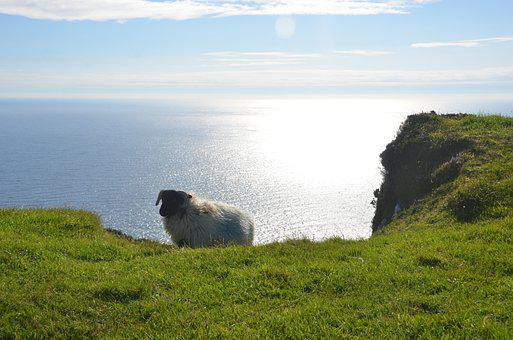 Ireland, Sheep, Ocean, Cliff