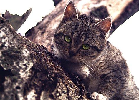 Cat, Kitty, Kitten, Cat's Eyes, Feline, Pet, Domestic