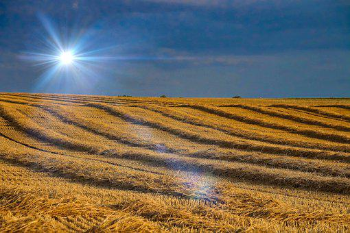 Field, Plain, Wheat, Rural, Harvest