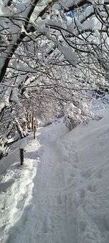 Snow, Forest, Landscape, Winter, Wintry, Nature, Trees