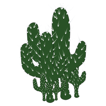 Cacti, Thorns, Plant, Prickly, Succulent, Desert