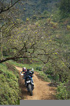 Trail, Forest, Motorbike, Trees, Path, Motorcycle