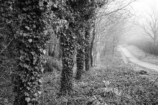 Path, Trees, Forest, Woods, Woodlands, Bare Trees