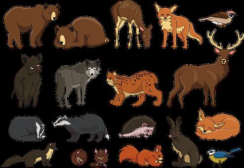 Animal, Badger, Bear, Bird, Boar, Character, Deer, Doe