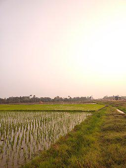 Farm, Crop, Paddy, Agriculture, Farming, Cultivation