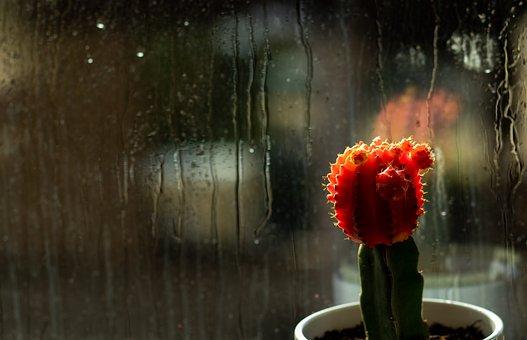 Cactus, Flower, Plant, Plant Pot, Moon Cactus