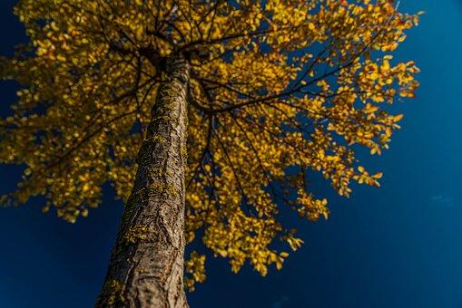 Nature, Tree, Green, Plant, Landscape, Nobody, Sky