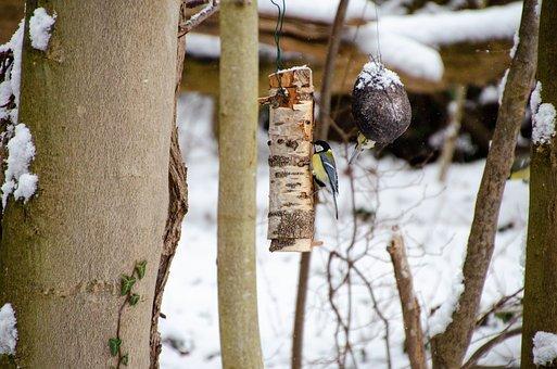 Bird, Tit, Wood, Ave, Avian, Ornithology, Bird Watching