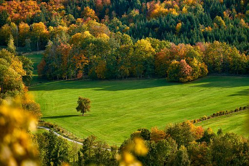 Field, Trees, Fall, Autumn, Mood, Autumn Color