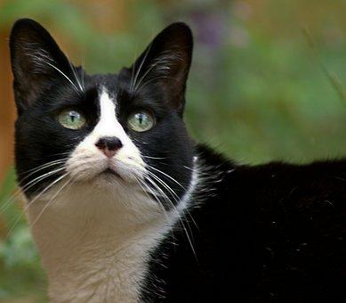 Cat, Feline, Pet, Animal, Cute, Mammal, Kitty, Fur