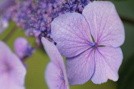 Purple, Green, Flower, Meadow, Decorative