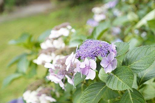 Purple, White, Green, Leaf, Flower, Field