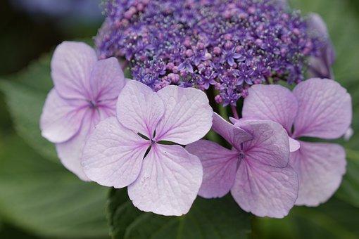 Purple, Green, Flowers, Meadow, Lavender