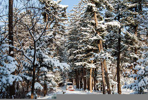 Korea, Temple, Winter, Nature, Mountain, Wood