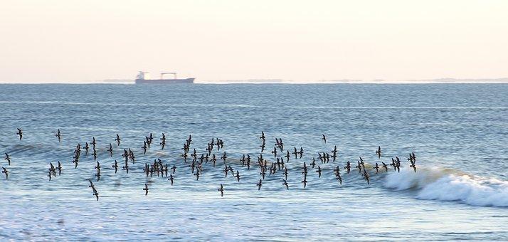 Ocean, Birds, Flock, Wave, Boat, Ship, Sea, Maritime