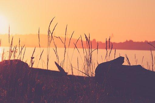 Sunrise, Grasses, Coast, Dawn, Morning, Sunlight