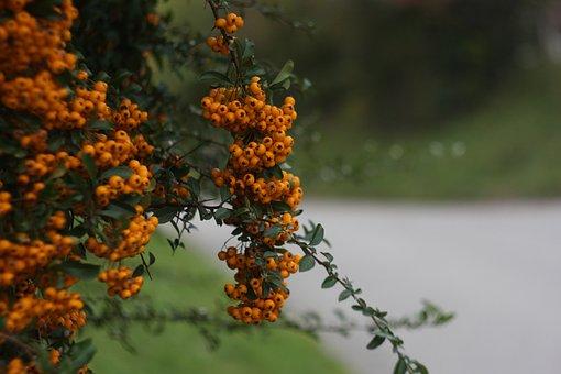 Green, Nature, Tree, Park, Road, Day, Walking, Orange