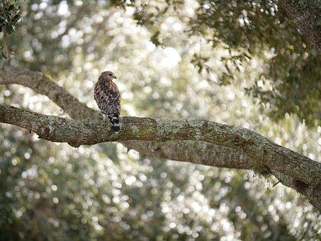 Bird, Nature, Animal, Falcon, Tree With Bird