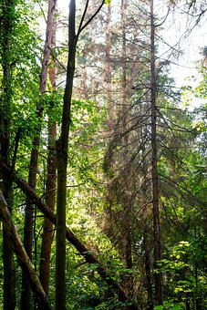 Forest, Mixed Forest, Scenic, Beautiful, Green, Summer