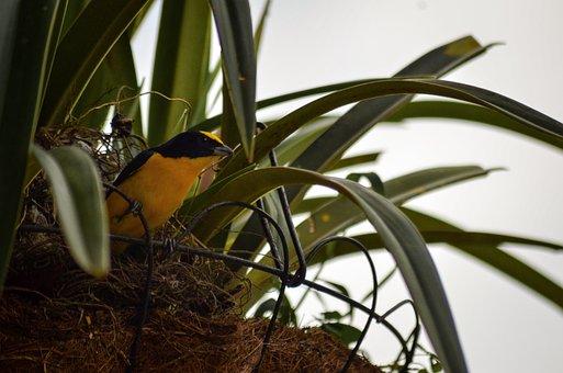 Nest, Bird, Birds, Nature, Animals, Freedom, Hungry