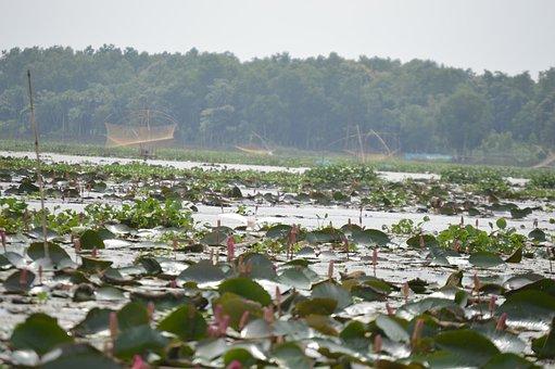 Pond, Lake, Leaf, Bloom, Nature, Blossom, River, Purple