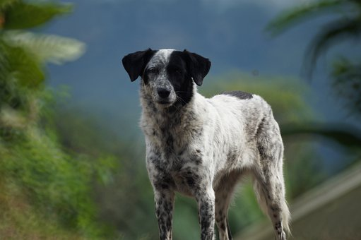 Animal, Dog, Canine, Pet, Colombia