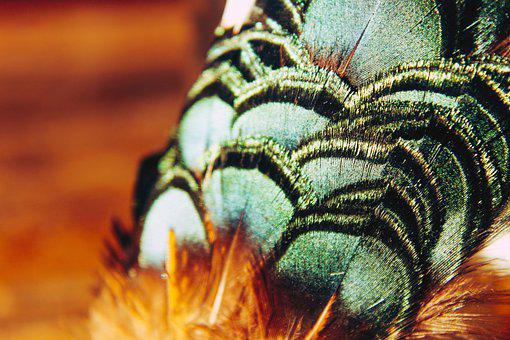 Feathers, Pow Wow, Brilliant, Bright, Iridescent