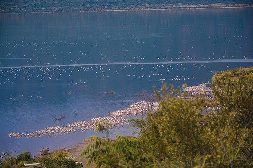 Flamingos, Flamingolove, Birds, Flamingoparty