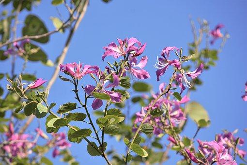 Flowering Tree, Pink Flowers, Blooming, Artistic