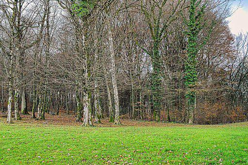 Grove, Tree, Prairie, Nature, Landscape, Wood, Green
