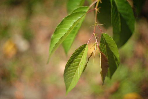 Leaf, Natural, Nature, Green, Autumn, Leaves, Plant