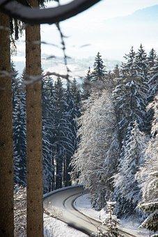 Forest, Road, Winter, Sun, Green, Wood, Fantasy