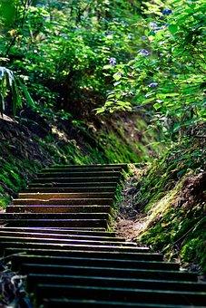 Japan, Stairs, Green, Natural, Hydrangea, Mountain