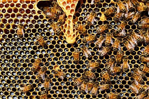 Queen Cup, Honeycomb, Honey Bee