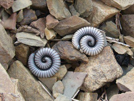 Worms, Millipede, Centipede, Spiral