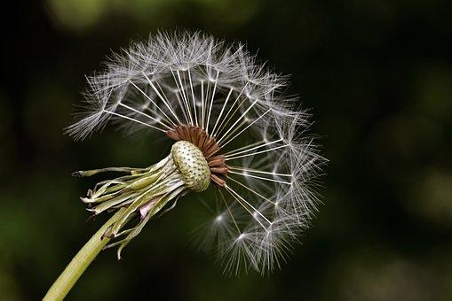 Milkweed, Summer, Nature, Plant, Garden, Natural