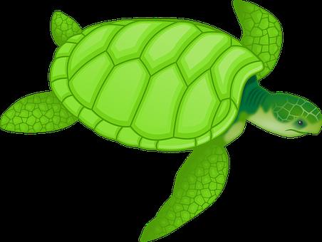 Tortoise, Green, Reptiles, Turtles, Hard, Tough, Shell