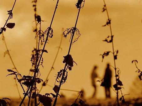 Nettles, Weeds, Sunset, Plants, Herb, Wild, Flora