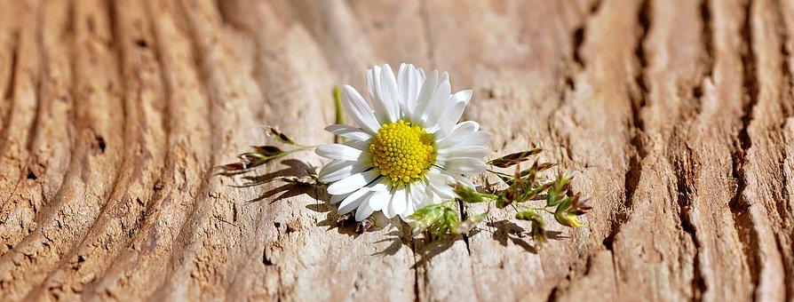 Flower, Blossom, Bloom, White, Grasses, Wood