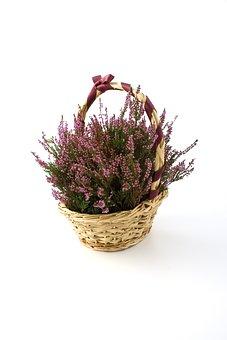 Flower, Flowers, Basket, Baskets, Heath, Heather, Bell