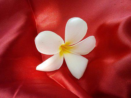 Flowers, More Information, Fragrapanti, Red, Fabric