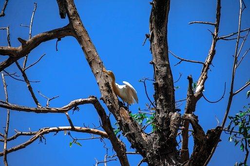 Bird, Nepal, Flying, Wildlife, Nepalese, Blue