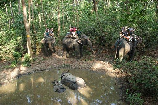 Nepal, Rhino, National Park, Chitwan, Elephants, Ride