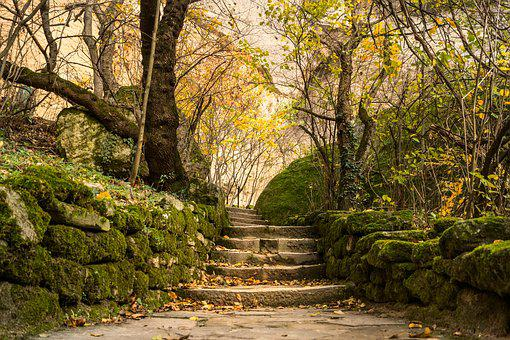Forest, Moss, Stones, Steps, Rocks, Timber, Bushes