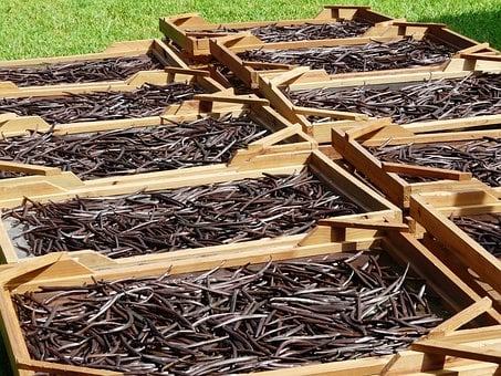 Drying, Vanilla Beans, Mauritius, Plantation, Culture