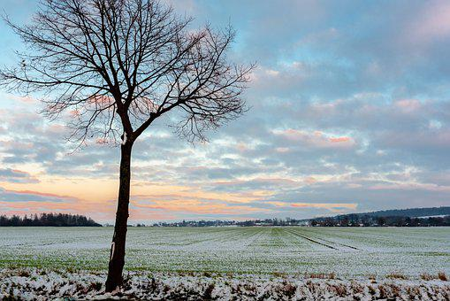 Field, Arable, Tree, Agriculture, Snow, Nature, Dawn