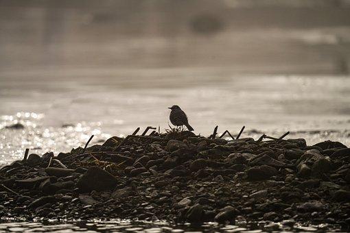 Bird, Bank, Lake, Rocks, Stones, Animal, Wildlife, Fog