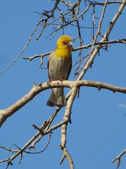 Bird, Madagascar, Branch