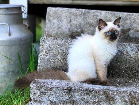 Cat, Milk, Kitten, Animals, Family