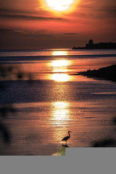 Sunset, Sea, Crane, Silhouette, Sun, Sunlight, Bird